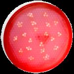 Ecola GX53 LED color 8,0W Tablet 220V Red Красный матовое стекло (композит) 28x74